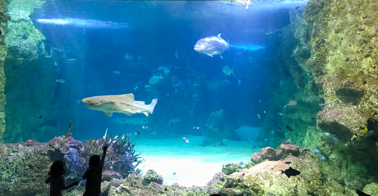 Sidney Sea Life - Cosa fare a Sydney