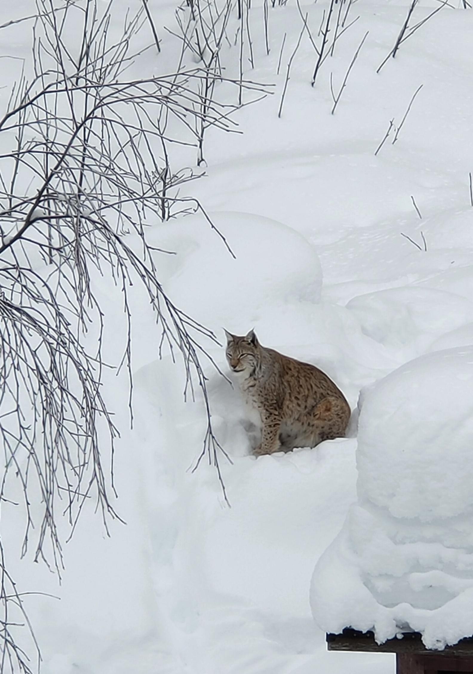Cosa fare nella Lapponia Finlandese - Ranua Wildlife Park